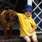 Como manter uma casa de cachorro fresca no verão