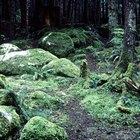 Uma lista de animais que vivem no solo da floresta tropical