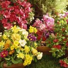 Colorful flowers supply a refreshing update.