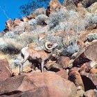 Senderismo en Topock, Arizona