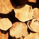 Cómo hacer una jardinera de tronco