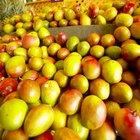 How Heavy Is Mango Wood?