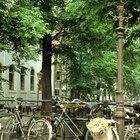 Tours de bicicletas en Holanda