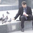 Métodos fáciles de domesticar palomas