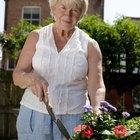 Cómo cuidar las petunias en macetas al aire libre