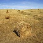 Quanto tempo a camada de solo arável demora para se formar?