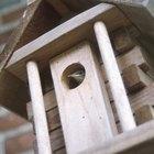 Cómo atraer pájaros a una casa para pájaros