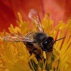 Sprays não tóxicos para matar abelhas