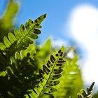 Bugs Lay Eggs on My Ferns