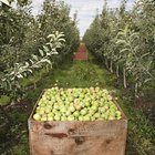Lista de árboles frutales