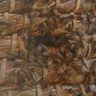 Cómo quitar un enjambre de abejas