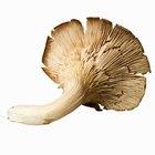 Como cultivar cogumelos em fardos de palha