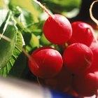 ¿Qué frutas y vegetales crecen más rápido?