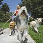 ¿Cuánto debería cobrar por pasear perros?