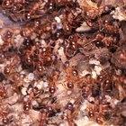 Bichos e insetos que vivem embaixo da terra