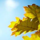 Ideas de preescolar para una lección con tema de otoño
