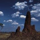 ¿Qué sonidos hacen las termitas?