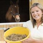 Qual o tamanho de pasto ideal para alimentar um cavalo?