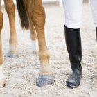 How to Cure a Popped Splint on a Horse