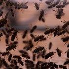 Insectos y su papel en el ecosistema