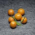Cómo hacer vino de mandarina