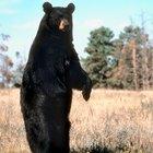Cómo mantenerte seguro de los osos mientras haces caminatas en Blue Ridge Parkway