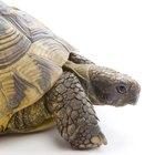 Cómo hacer el hábitat para una tortuga