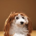 How Long Does It Take for Dogs' Hair to Grow?