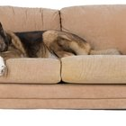 Ideas to Protect a Couch and a Flokati Rug from Dogs