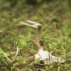 ¿Los descomponedores devuelven los nutrientes al suelo?