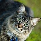 Cómo hacer un refugio para gatos en el jardín