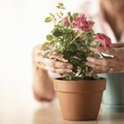 What type of glue do you use on a flower pot?