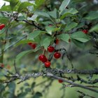 Types of Edible Berries