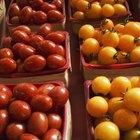 Características de los tomates