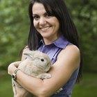 Remédios seguros para aliviar a dor em coelhos