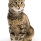 The Best Foods for Male Cats with Urinary Tract Cysts