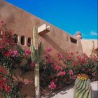 Xeriscape landscaping uses plants that don't require a lot of water.