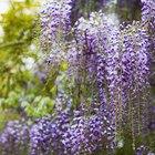 DIY trellis for wisteria