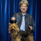 What Are the Classes of Dogs in a Dog Show?