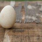 Como fazer um lançador de ovos