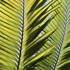 Black Spots on a Palm Tree