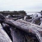 How to polish driftwood