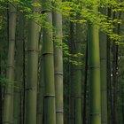 Cómo hacer que los tallos de bambú crezcan más rápido