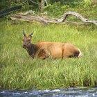 Definición de un hábitat natural