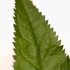 The Benefits of Nettle Leaves & Herbs