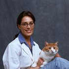 Elevated Kidney Levels in Cats & Surgery