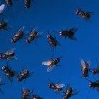 O que atrai moscas?