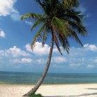 Las más bellas playas de los Cayos de la Florida