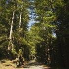 Los parques estatales más cercanos a Blue Ridge, Georgia