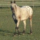 Tratamento para conjuntivite em cavalos